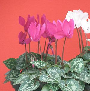 Planten stemmen werknemers tevreden