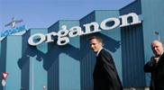 Mogelijk fors meer banen weg bij Organon