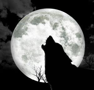Grote boze wolf vervangt personeel