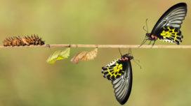 10 vuistregels voor optimaal medewerkersonderzoek