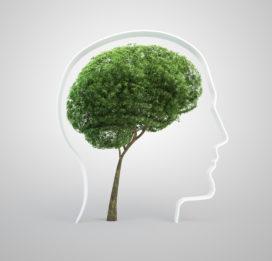 Focus op de growth mindset om leren te stimuleren
